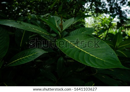 Green palm leaves in tropical rainforest. Beautiful ferns leaves green foliage nature. Floral fern background. Ferns leaves green foliage. Tropical leaf. Exotic forest plant. Botany concept. #1641103627