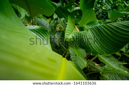 Green palm leaves in tropical rainforest. Beautiful ferns leaves green foliage nature. Floral fern background. Ferns leaves green foliage. Tropical leaf. Exotic forest plant. Botany concept. #1641103636