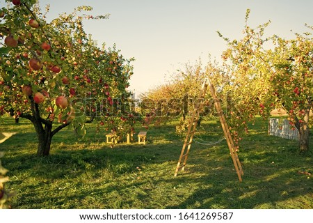 To plant garden is to believe in tomorrow. Apple garden. Apple trees grow in fruit garden. Garden trees on sunny day. Gardening. Orchard. Summer or autumn season. Harvest time. #1641269587