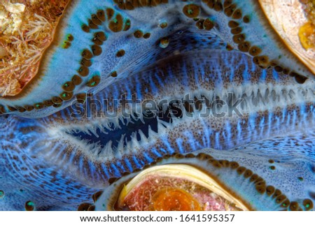 super macro picture of beautiful giant clam intake hole