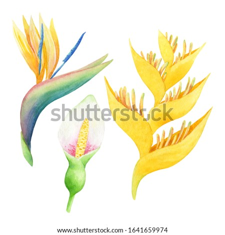Set of watercolor yellow and white tropical flowers. Hand-drawn illustration isolated on white background. Bright exotic clip art great for cosmetics design, card making and wedding decor.