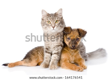 cat and dog looking at camera. isolated on white background #164176541
