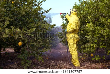 Weed insecticide fumigation. Organic ecological agriculture. Spray pesticides, pesticide on fruit lemon in growing agricultural plantation, spain. Man spraying or fumigating pesti, pest control #1641807757