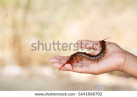 Centipedes are poisonous animals, climbing on hands and arms. Royalty-Free Stock Photo #1641868702