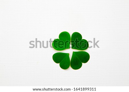 green clover leaf lucky charm is believed bring luck or fortune isolated in white background Royalty-Free Stock Photo #1641899311