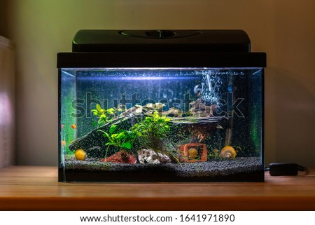 Small fish tank aquarium with colourful snails and fish at home on wooden table. Fishbowl with freshwater animals in the room