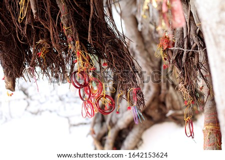 The faith - people fasten bangles in a old tree for accomplishment of their wishes. #1642153624
