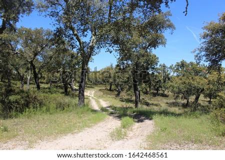 Path between Cork oak trees near Avis, Portugal #1642468561