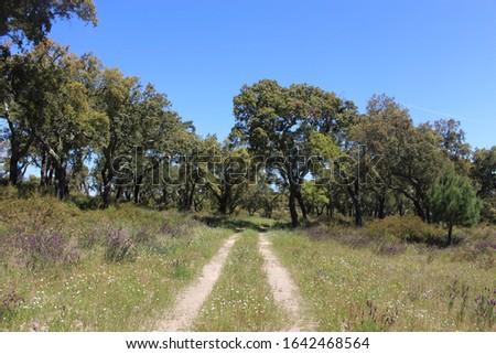Path between Cork oak trees near Avis, Portugal #1642468564