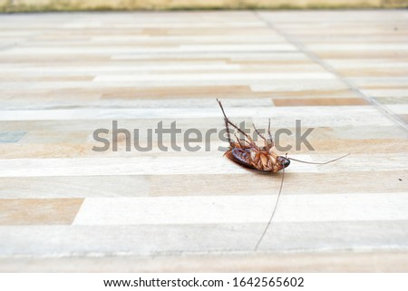 one creepy cockroach dead on floor with insecticide killing #1642565602