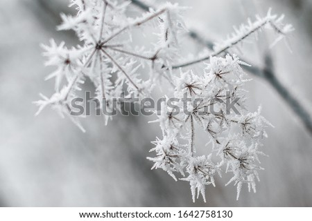 grass covered with frost in the first autumn frosts, abstract natural background. green leaves of plants covered with frost, top view. Late autumn, the concept of frost Royalty-Free Stock Photo #1642758130