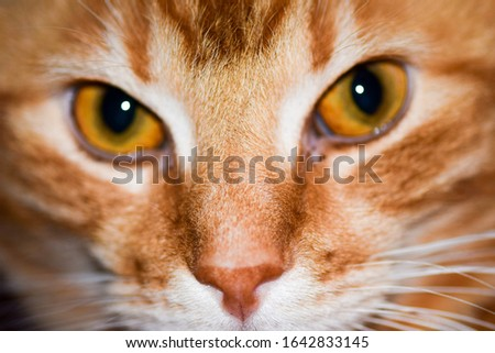 Red ginger cat eyes view. Ginger cat eyes. Red cat eyes #1642833145