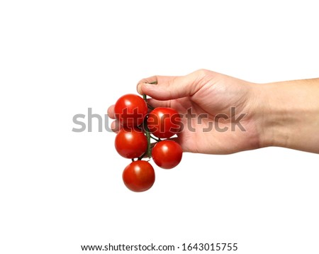 Hand holding fresh cherry tomatoes isolated on white background. Ripe vegetables for healthy food. #1643015755