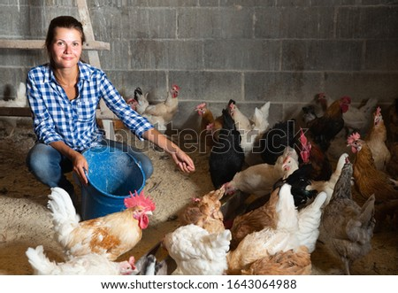 Farmer woman feeding chikens in a hen house #1643064988