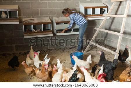 Farmer woman feeding chikens in a hen house #1643065003