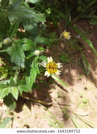 a beautiful wild flower, very rare in Ceará #1643189752