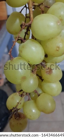 Best green grapes stock photo