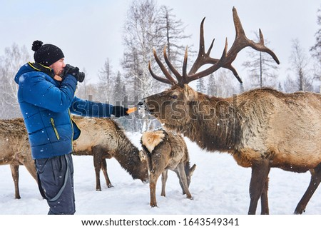male wildlife photographer preparing to take a picture of a deer by luring him with carrots