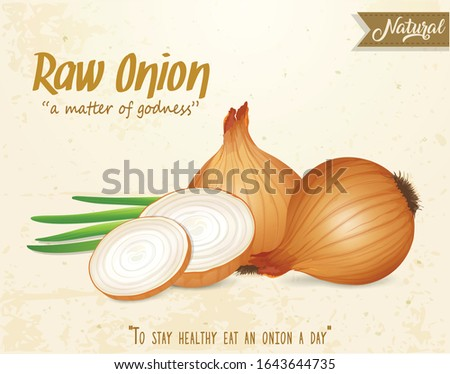 yellow onion with half piece of onions vector illustration Royalty-Free Stock Photo #1643644735