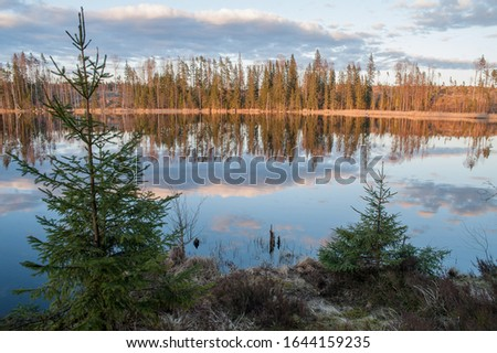 Forest lake in spring time. Two green fir trees on the foreground, sunny coniferous forest on another shore and calm lake surface with reflection of blue sky with clouds. Karelian isthmus. Russia. #1644159235