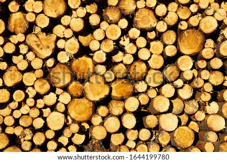 Logs piled up in a massiv pile awaiting transformation to building materials or energy source #1644199780