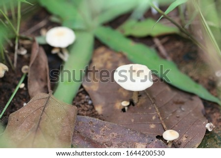 Tropical poisonous mushrooms blossoming in the forest concept of botany nature. #1644200530