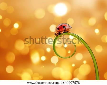 Lady Bug Macro Stage Macro Art  #1644407578