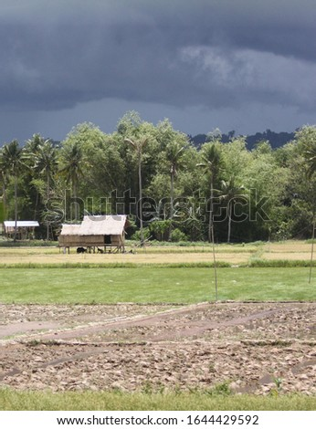 Tropical farmland stands still as thunderstorm coming #1644429592