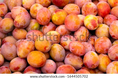 Fresh yellow plums. Macro photo. Food. Top view natural texture. Image fruit product. Close-up. Ripe fruits harvested in fall. Background from organic plums, own garden or market #1644505702