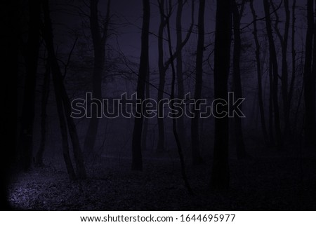 black dark blue dark picture of foggy forest with light from left side lighting to road and trees into fog #1644695977
