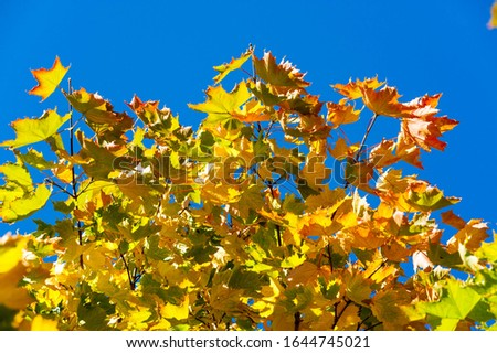Autumn landscape, Autumn leaves with the blue sky background, Yellow, red and green bright leaves and branches, fall themes #1644745021