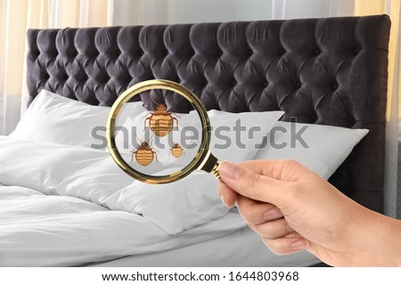 Woman with magnifying glass detecting bed bugs, closeup