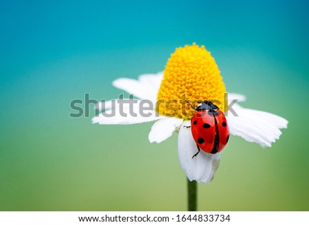 Ladybug sitting on flower in spring day. Macro picture with beautiful background.