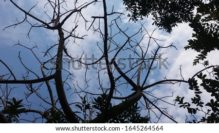 The beautiful blue sky in Bangladesh. Best blue sky background stick branch stock photos.