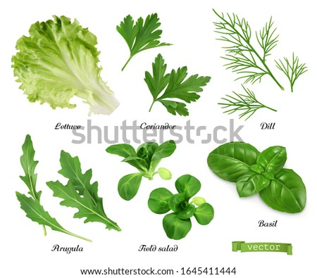 Greens and spices realistic vector set. Lettuce, coriander leaves, dill, arugula, field salad, basil. Food illustration Royalty-Free Stock Photo #1645411444
