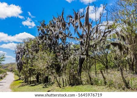landscape of the Miraflor natural Reserve near Esteli in Nicaragua #1645976719