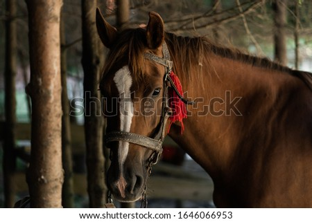 brown horse in the pasture. a horse grazes on a green meadow under the sun. Welsh pony running and standing in high grass, long mane, brown horse galloping, brown horse standing in farm
