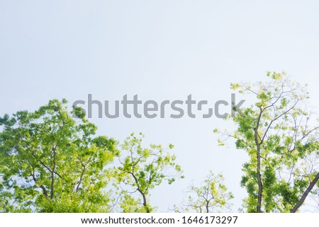 landscape, big tree in the forest, tree background  #1646173297