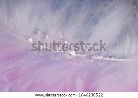 pink Feather  with  transparent drop of dew water , close-up macro. #1646230522