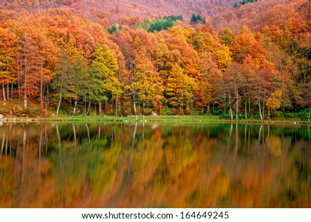 forest reflex in the lake in autumn #164649245