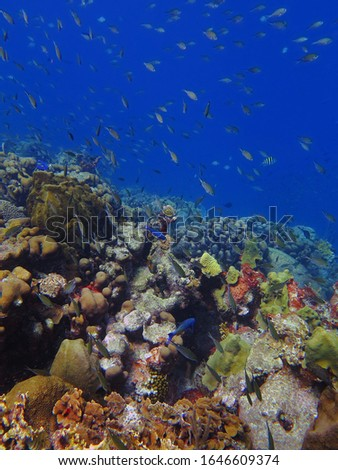 Tropical colorful seascape with school of fish and corals. Healthy marine life. Ocean ecosystem. Fish and coral reef in sea. Underwater picture from scuba diving.