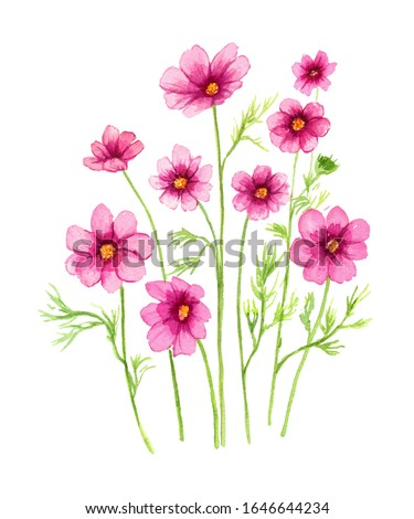 Pink cosmos flower element clip art watercolor painting isolated on white background hand drawn illustration for card or your design