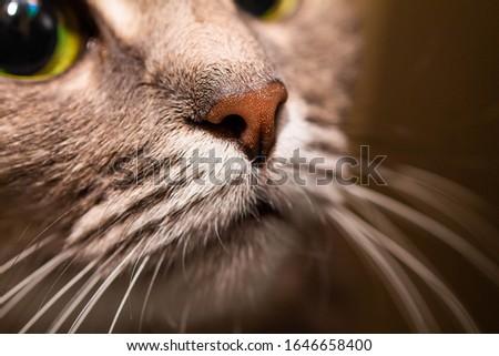 macro photo of cat nose #1646658400