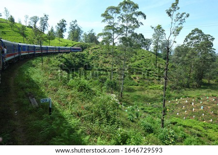 train rides in the mountains on tea plantations. Tea  plantations in Sri Lanka mountain #1646729593