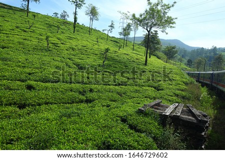 train rides in the mountains on tea plantations. Tea  plantations in Sri Lanka mountain #1646729602