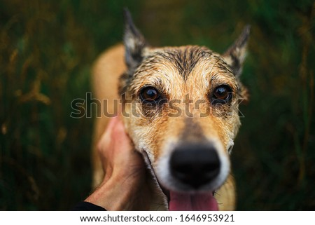 Front view at happy faithful dog with tongue out sitting on green grass and looking at camera while crop owner caring and stroking pet #1646953921