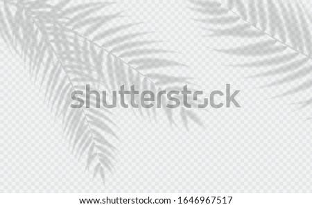Transparent shadow effects. Vector with shadow overlays on transparent background. Vector of transparent shadows of palm leaf, Leaves Royalty-Free Stock Photo #1646967517