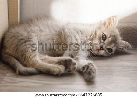 Soft kitty, warm kitty, Little ball of fur, Happy kitty, sleepy kitty, Purr, purr, purr #1647226885