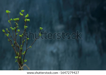 small branches with buds leaves / spring background, concept freshness botany youth #1647279427