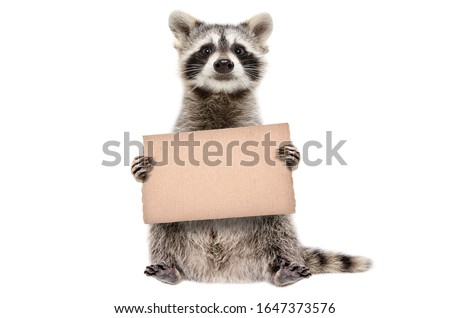 Funny raccoon standing with a cardboard in paws isolated on white background Royalty-Free Stock Photo #1647373576